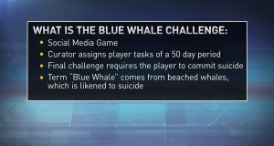 rules blue whale